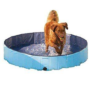 Cool Pup Splash About Dog Pool